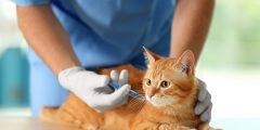 التلاقيح الأساسية للقطط