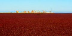 الشاطئ الأحمر في الصين