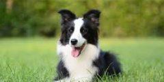 دور الكلب في المجتمع البشري