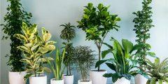 فوائد النباتات في المنزل