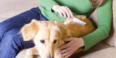 تساقط الشعر عند الكلاب