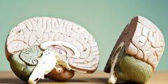 كيف يعمل الدماغ الأيسر والدماغ الأيمن